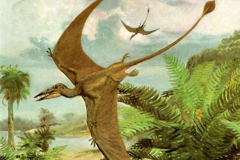 Динозавры в наше время фото016