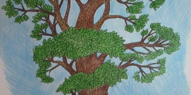 Дуб картинки для детей нарисованные003