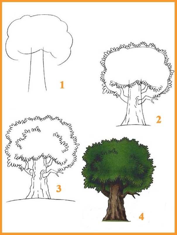 Дуб картинки для детей нарисованные011