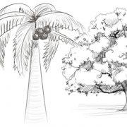 Дуб картинки для детей нарисованные021