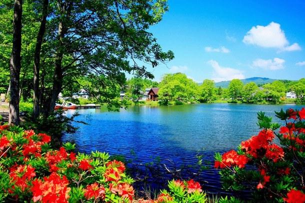 Картинки лето красивые на телефон004