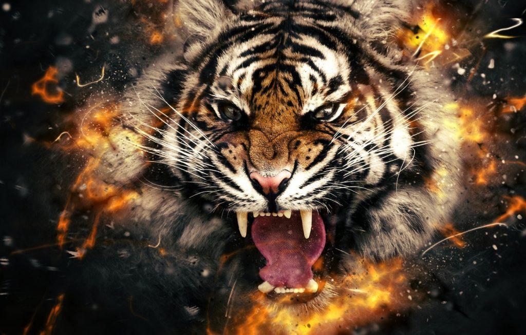 Картинки на рабочий стол тигр (2)