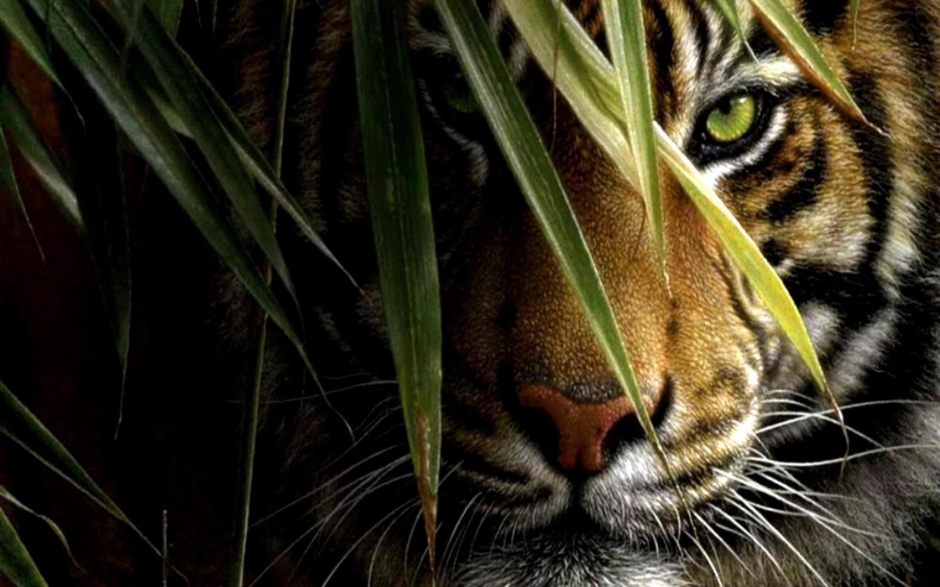 Картинки на рабочий стол тигр (20)