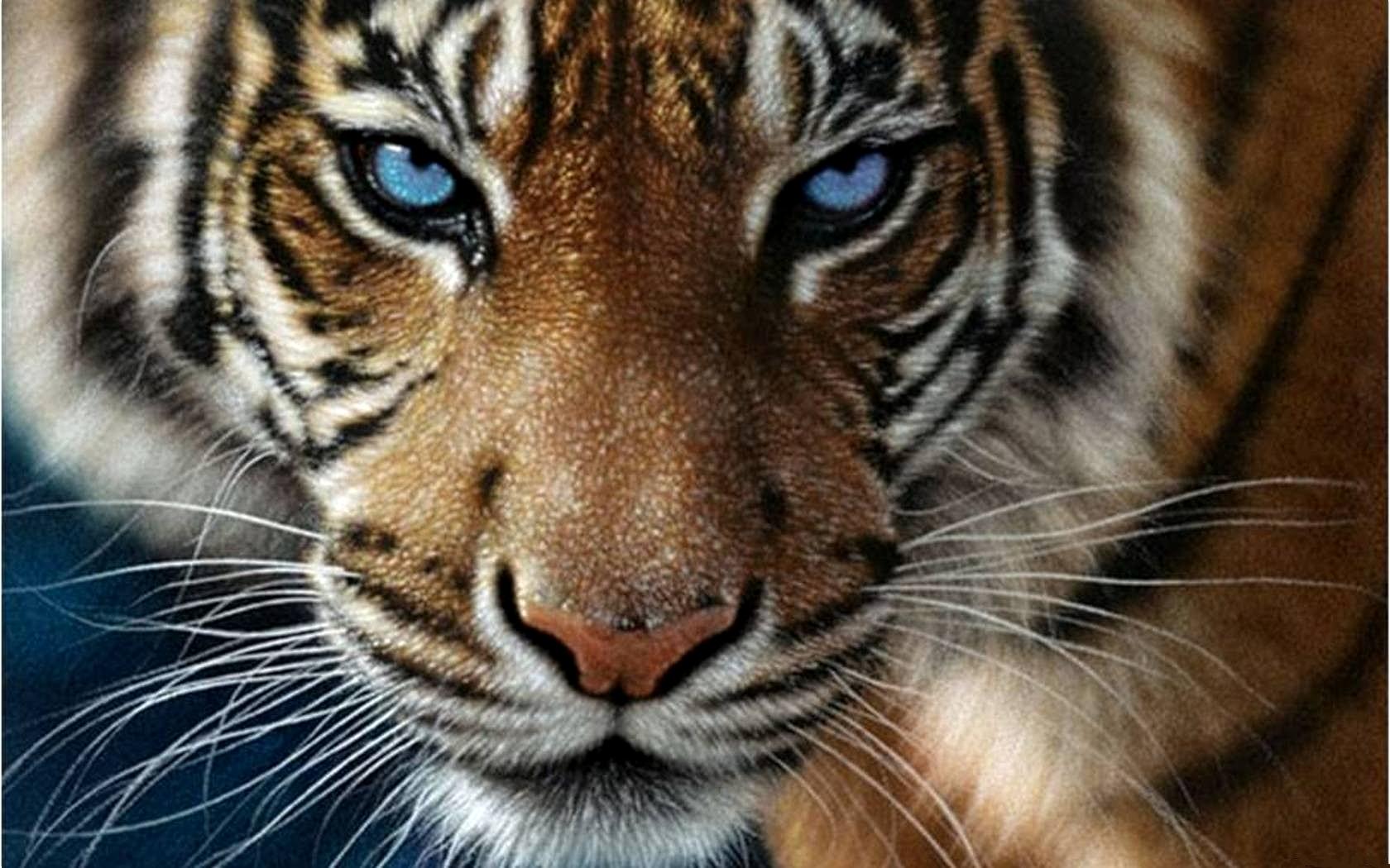 Картинки на рабочий стол тигр (9)
