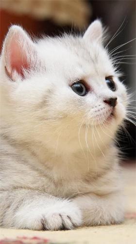 Картинки на телефон котята004