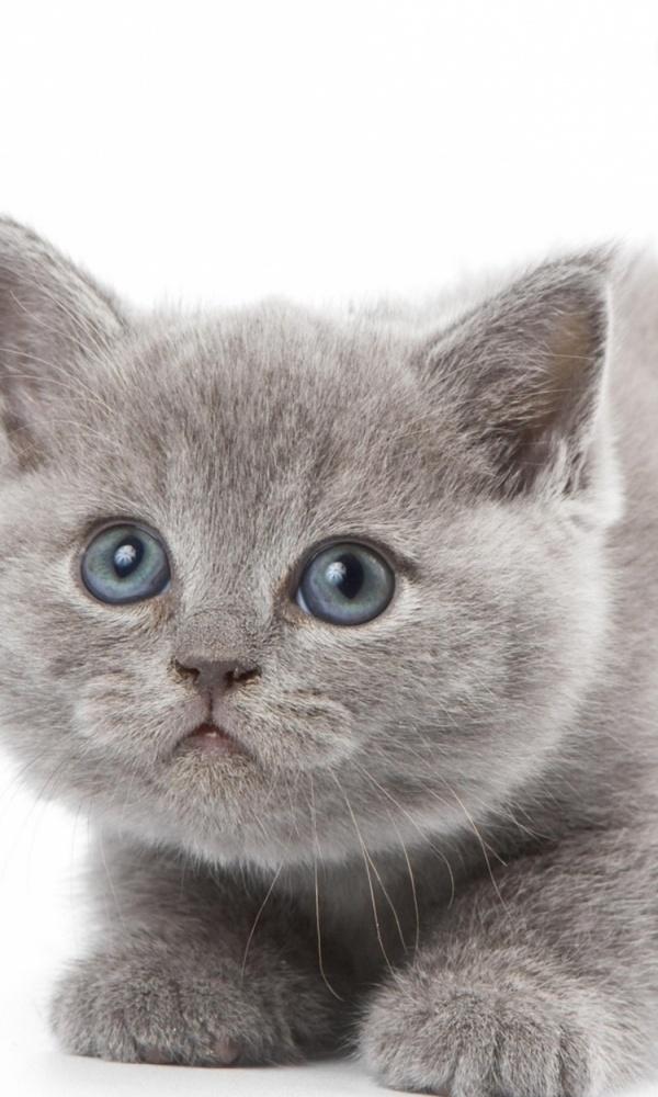 Картинки на телефон котята005