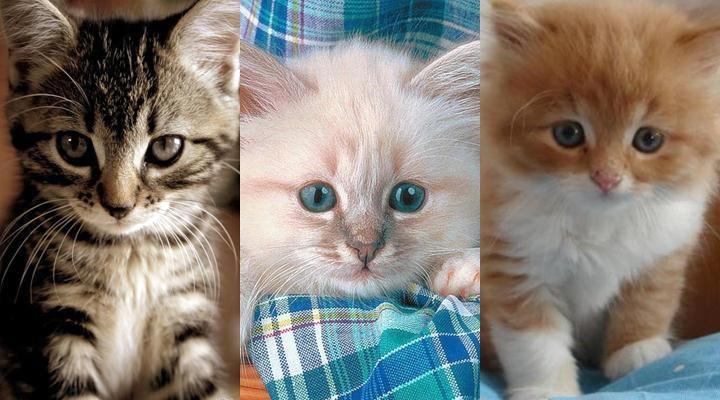 Картинки на телефон котята008
