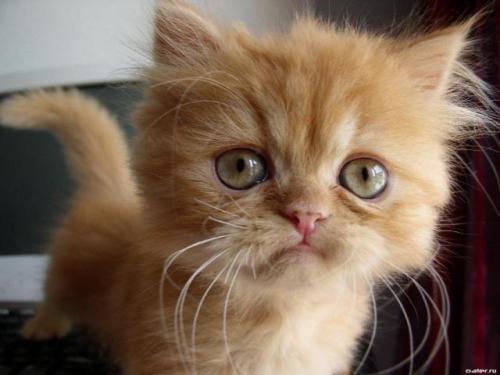 Картинки на телефон котята011