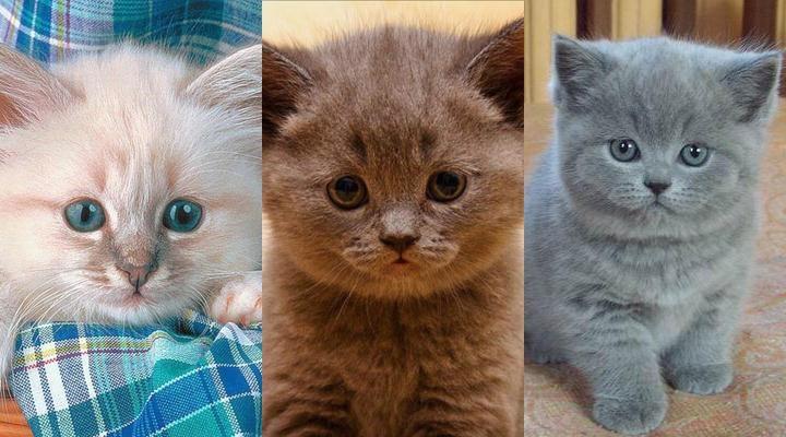 Картинки на телефон котята012