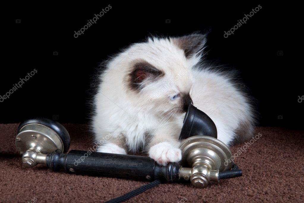 Картинки на телефон котята014