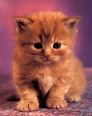 Картинки на телефон котята015