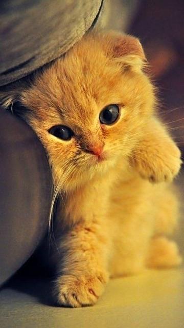 Картинки на телефон котята016