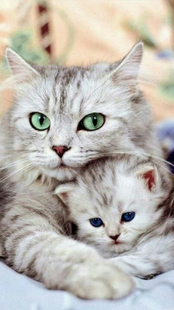 Картинки на телефон котята017