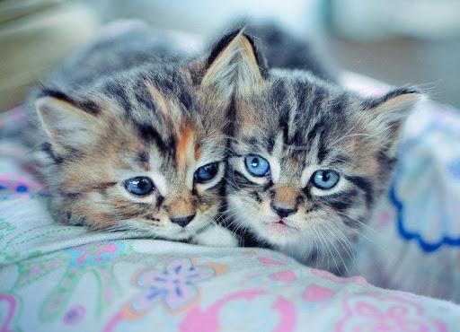 Картинки на телефон котята018