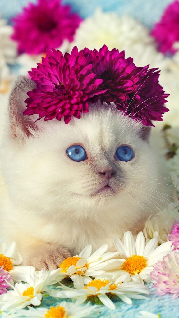 Картинки на телефон котята019