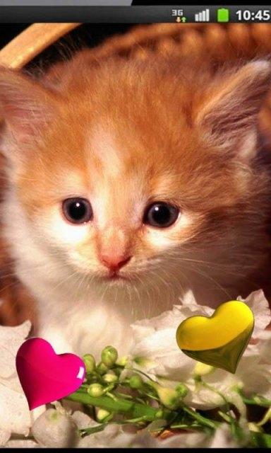 Картинки на телефон котята020