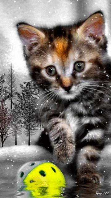 Картинки на телефон котята021