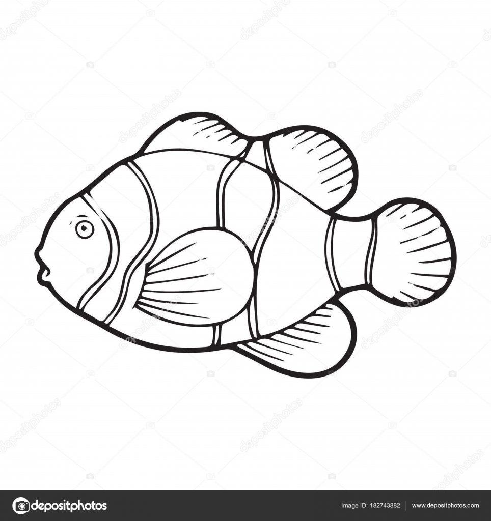 Картинки рыбки для детей на белом фоне (17)