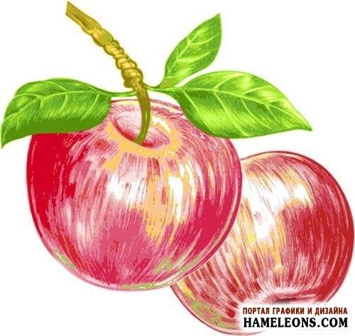 Красивые картинки яблоко на прозрачном фоне003