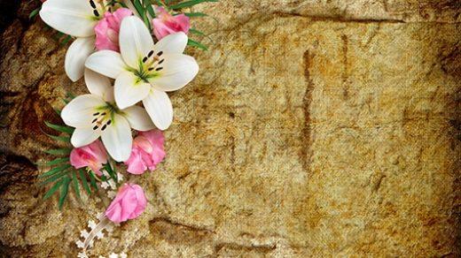 Красивый фон цветы для фотошопа022