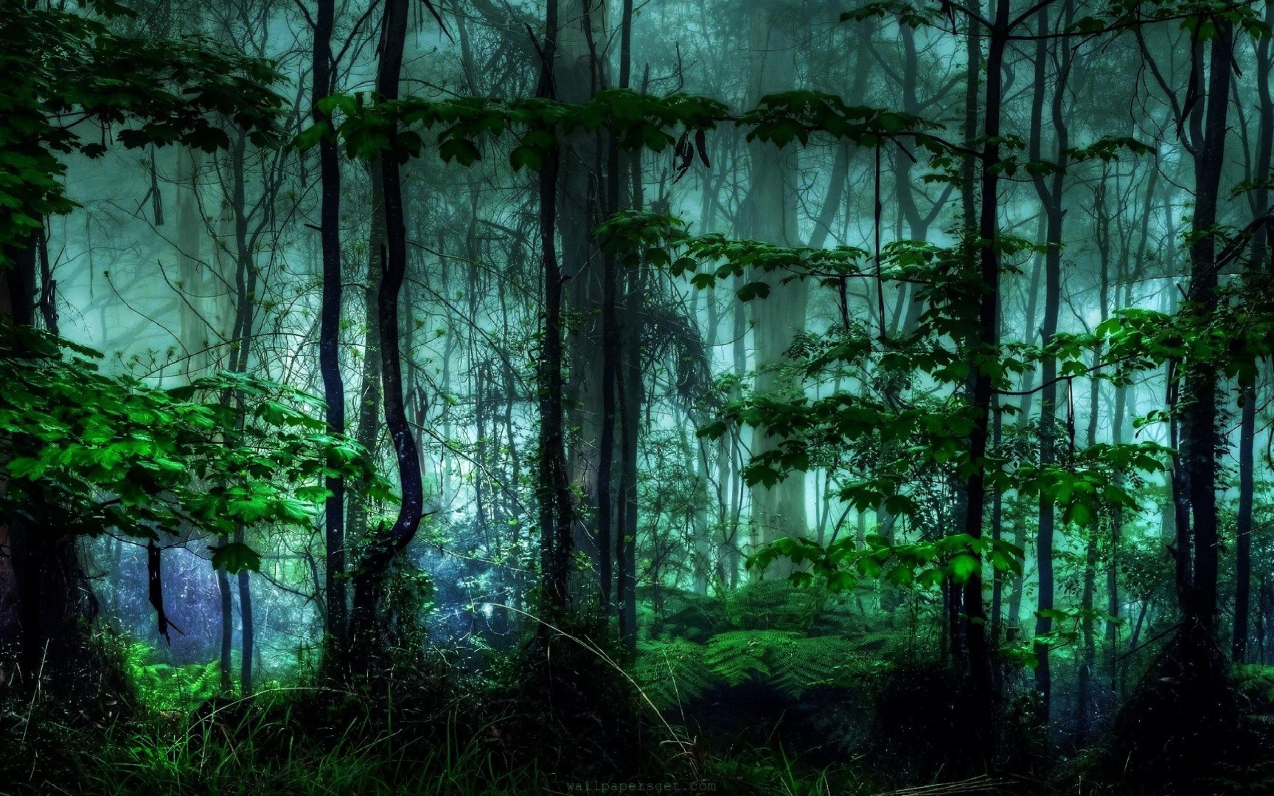 обратили меняющиеся картинки лес среди них