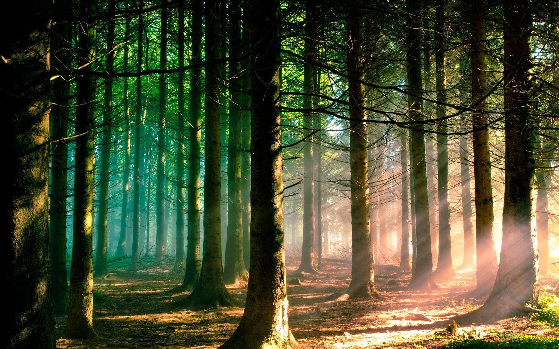 Картинки для телефона лес