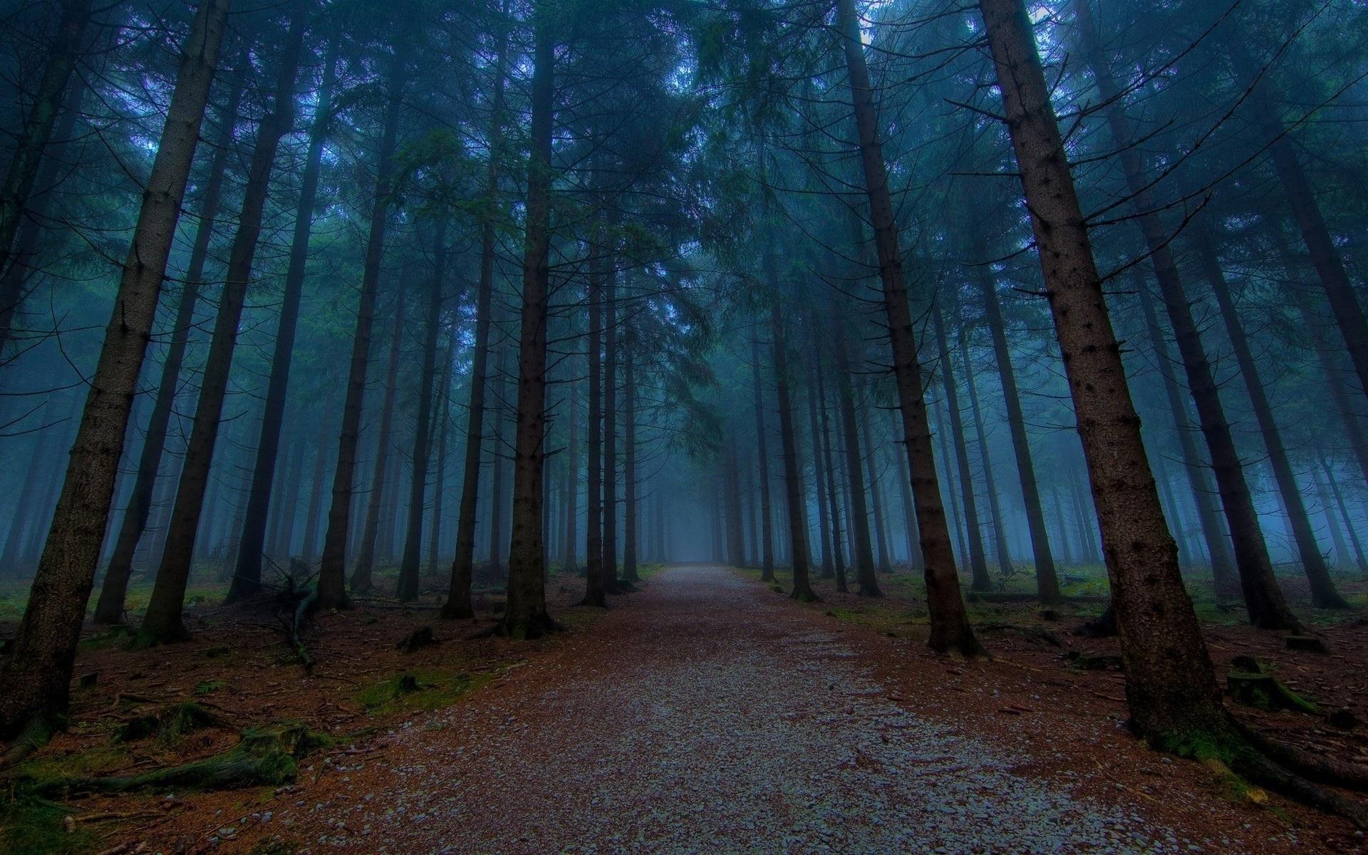картинки леса на ноутбук