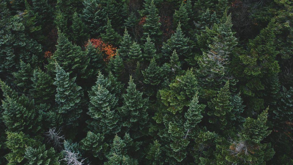Лес картинки на рабочий стол - подборка (8)