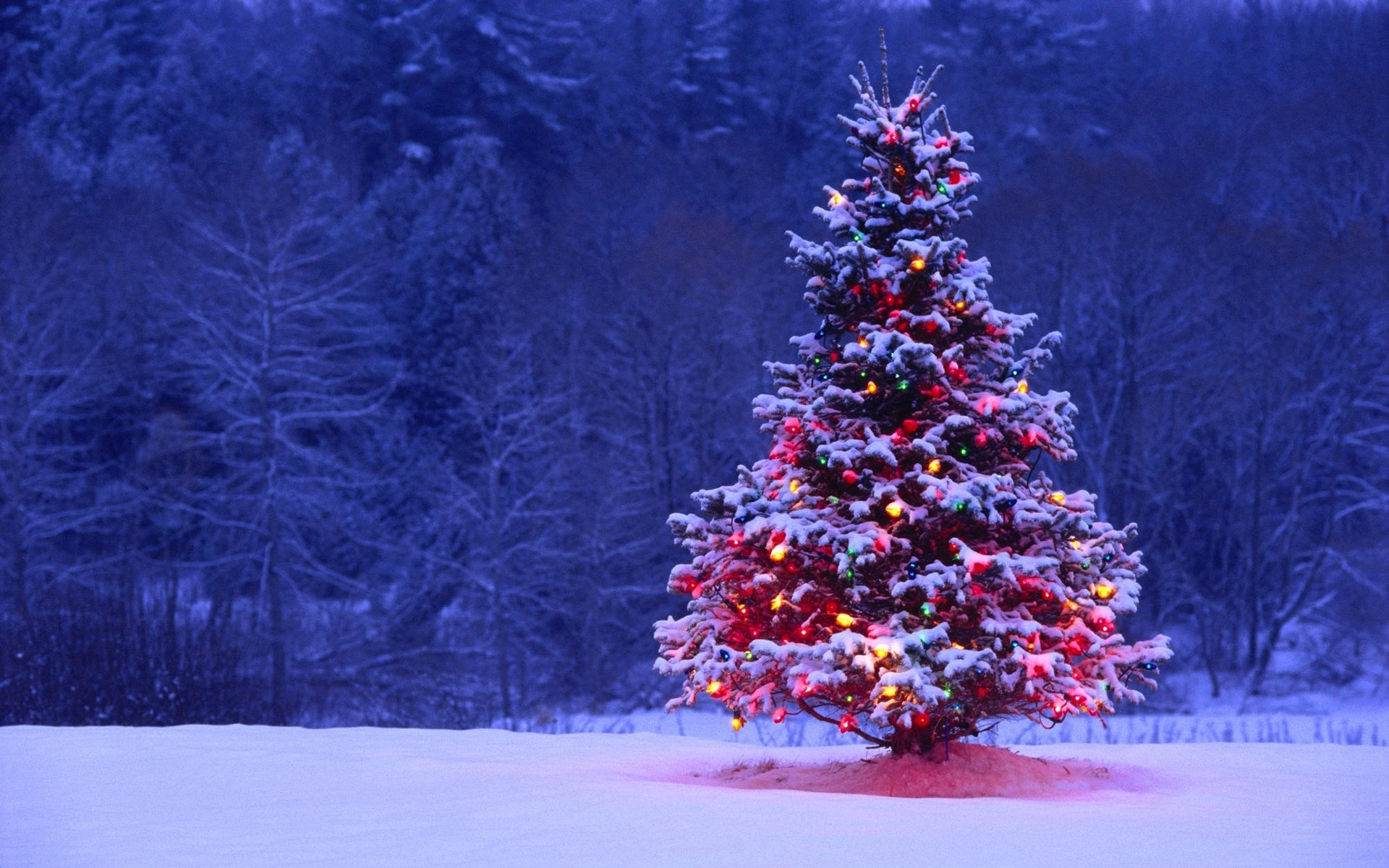 новогодние обои на рабочий стол елка в огнях широкоформатные подушкам так