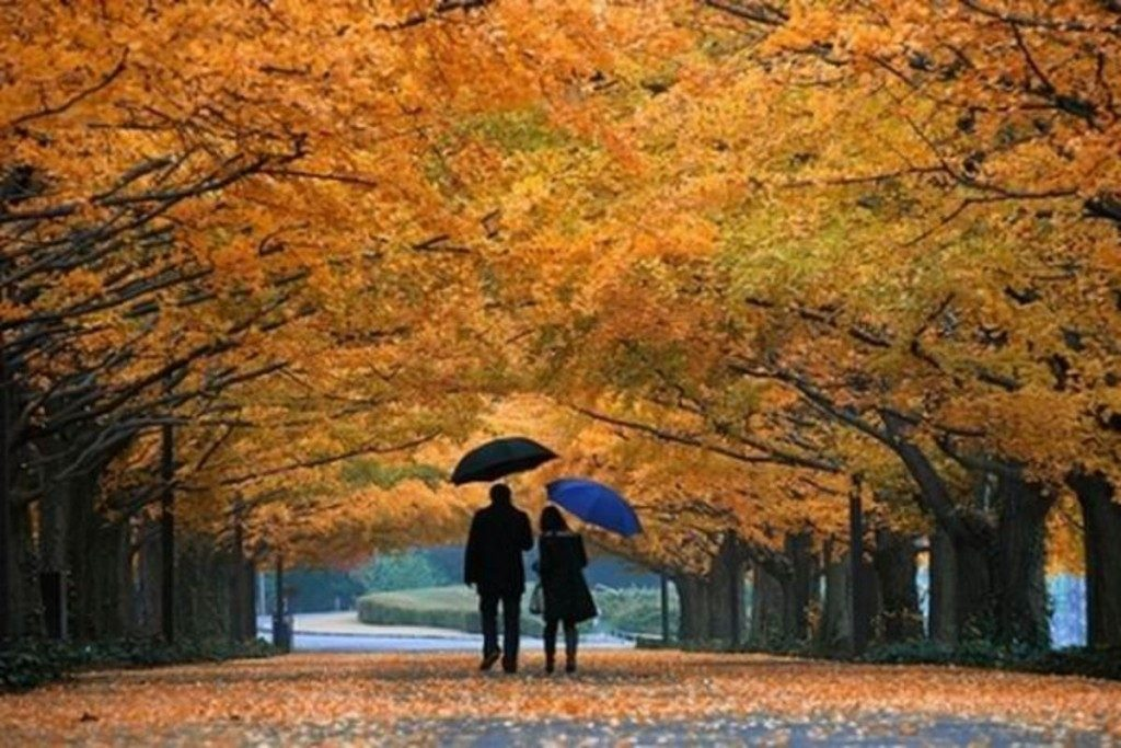 Пара в парке осенью 016