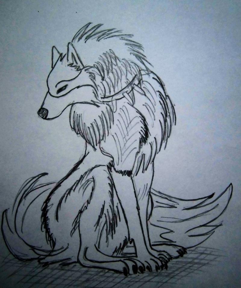 Рисунки для срисовки волки аниме008