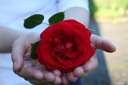 Утром цветы для любимой 017