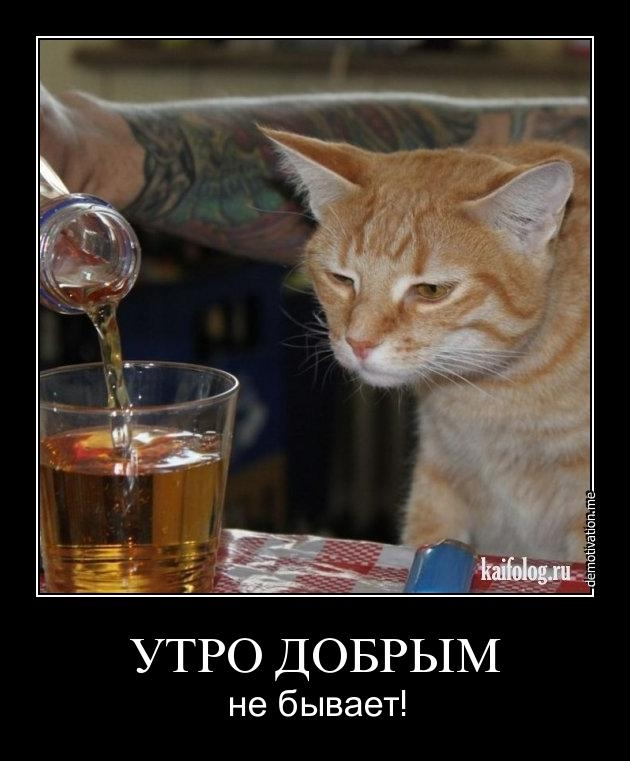 дисплазии пить с утра картинки прикольные очень