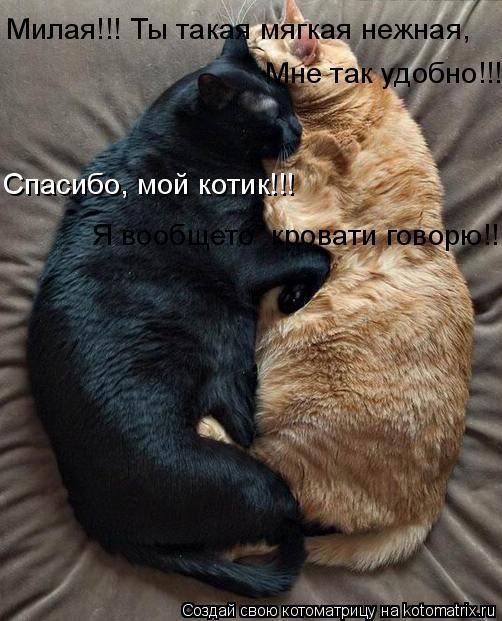 мой ты котик картинки (11)