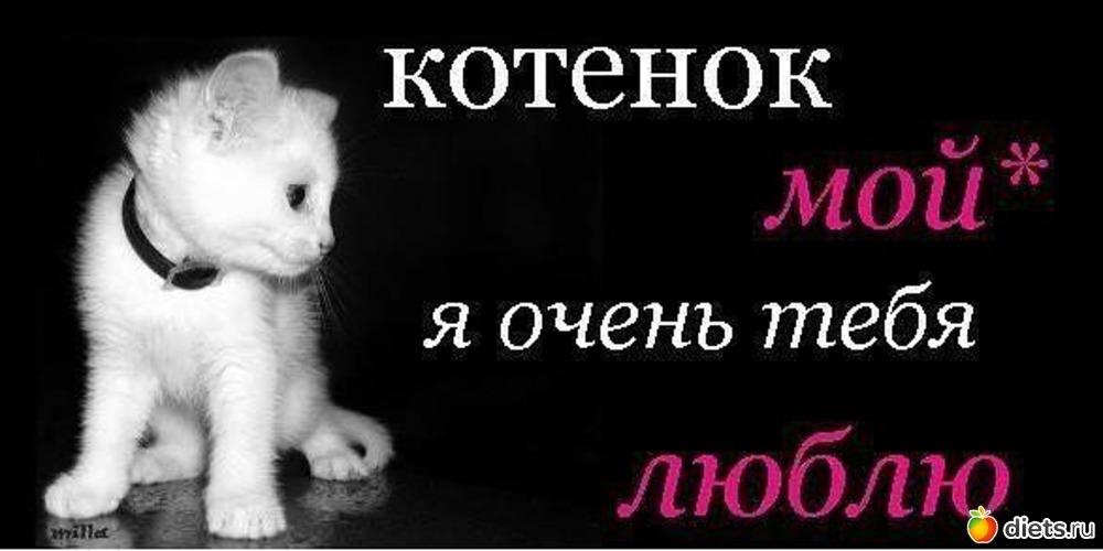 Картинки котят с надписью любимому, открытка деда