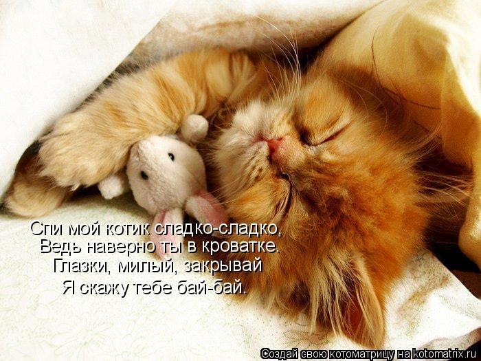 мой ты котик картинки (5)