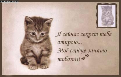 мой ты котик картинки (6)