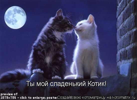 мой ты котик картинки (7)