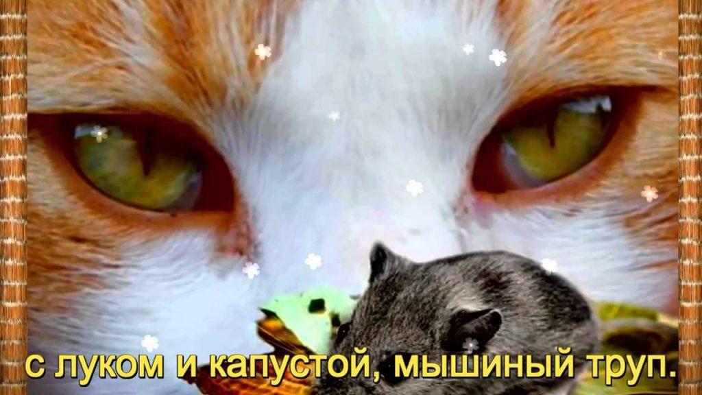 мой ты котик картинки (9)
