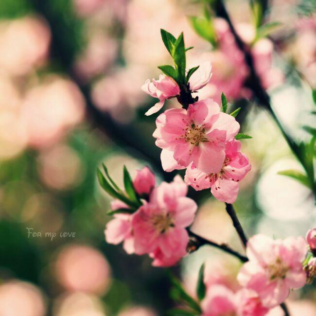 Весенние красивые картинки - большая коллекция (16)