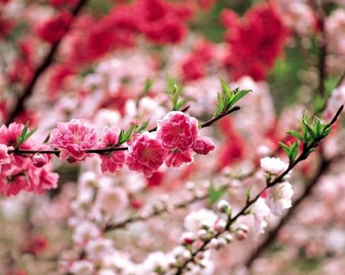 Весенние красивые картинки - большая коллекция (7)