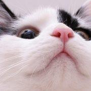 Горячий нос у кота   что делать