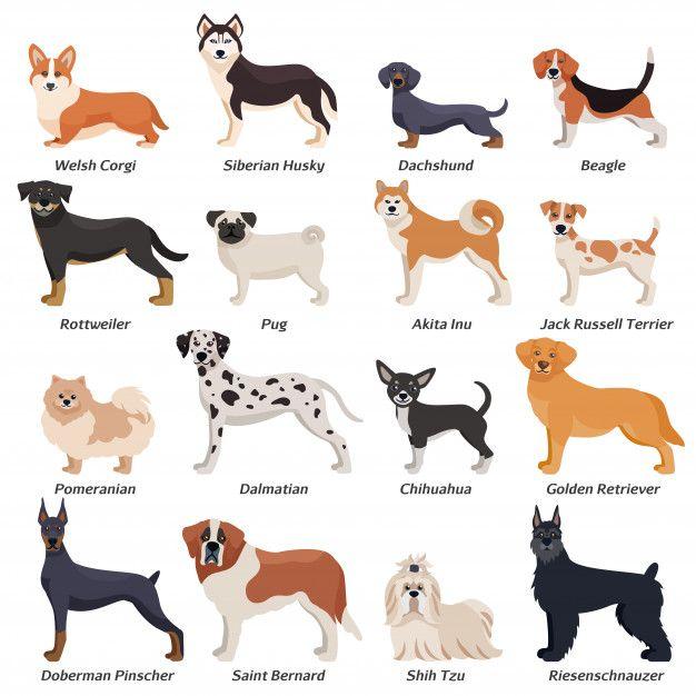 Графические рисунки кошек и собак - подборка (10)