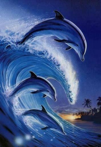 Дельфины красивые картинки и фото (1)