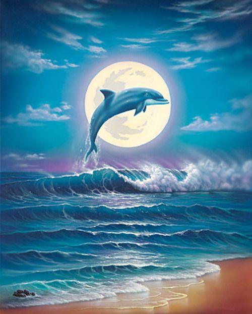 Дельфины красивые картинки и фото (14)