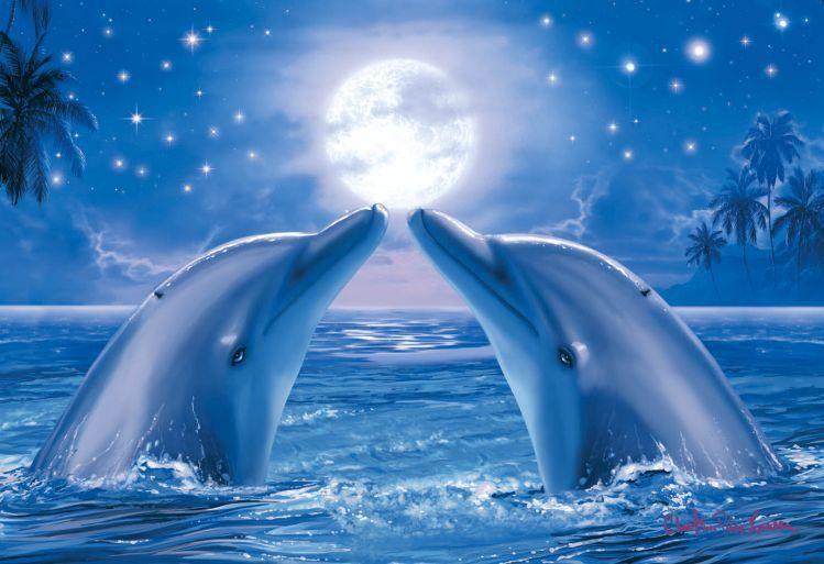 Дельфины красивые картинки и фото (20)