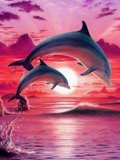 Дельфины красивые картинки и фото (21)