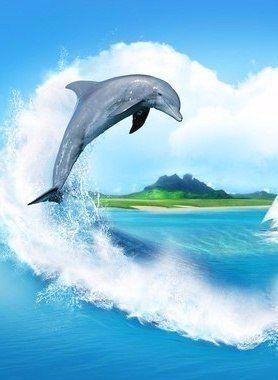 Дельфины красивые картинки и фото (24)