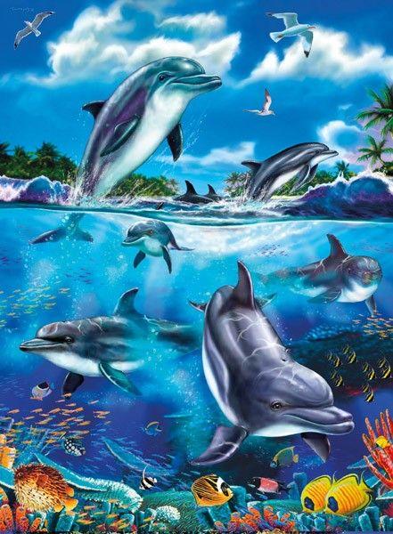 Дельфины красивые картинки и фото (28)