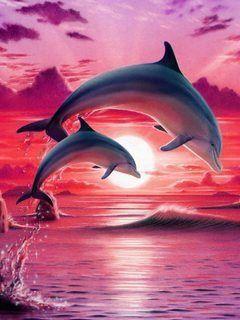 Дельфины красивые картинки и фото (29)